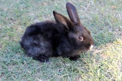 BlackBabbit.jpg